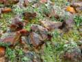 Свински хапки с домати и коприва